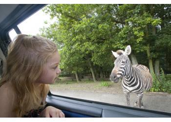 Safari de Peaugres Enfant